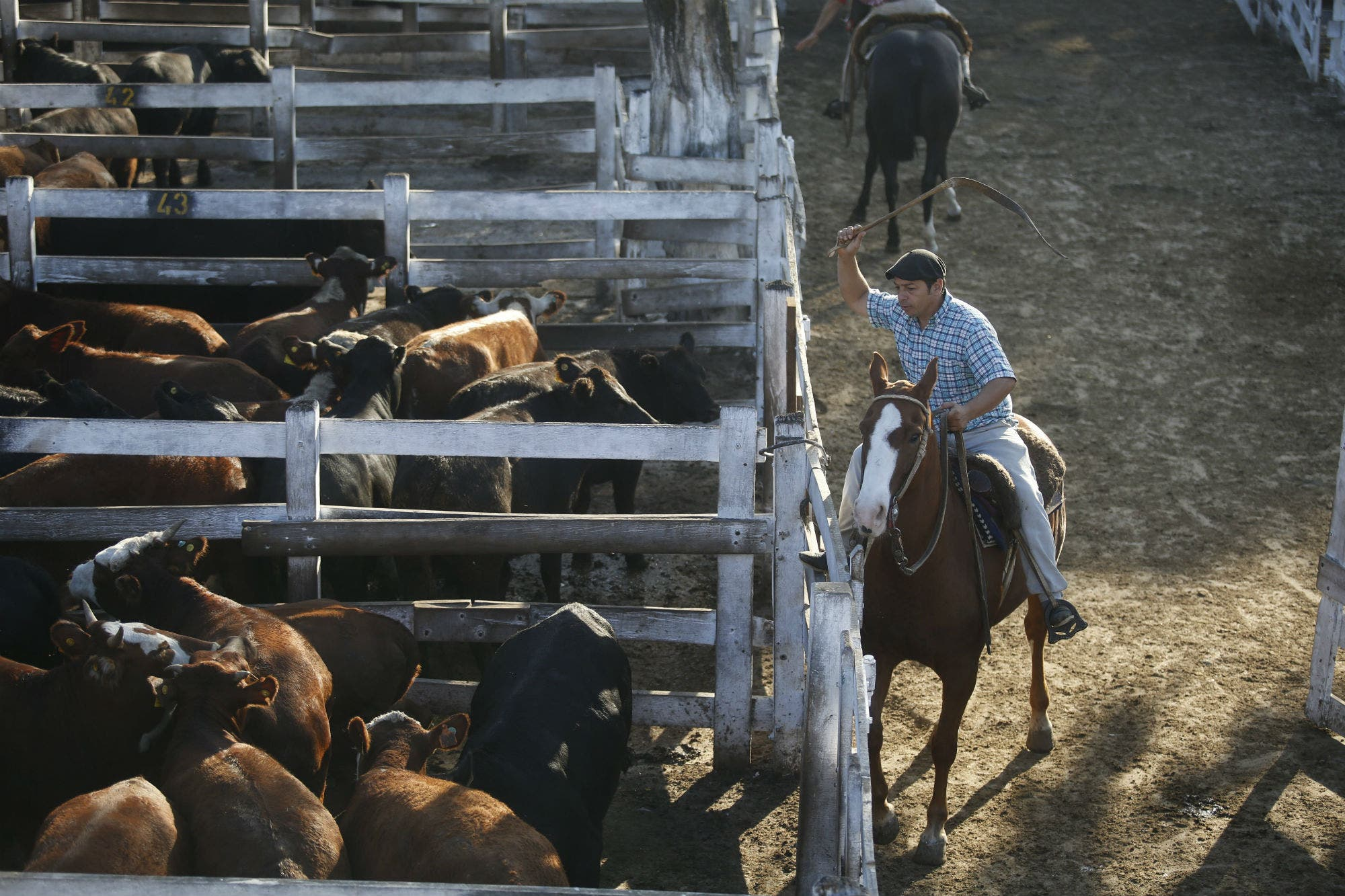 La semana cerró con saldo negativo para los indicadores ganaderos en el Mercado de Liniers