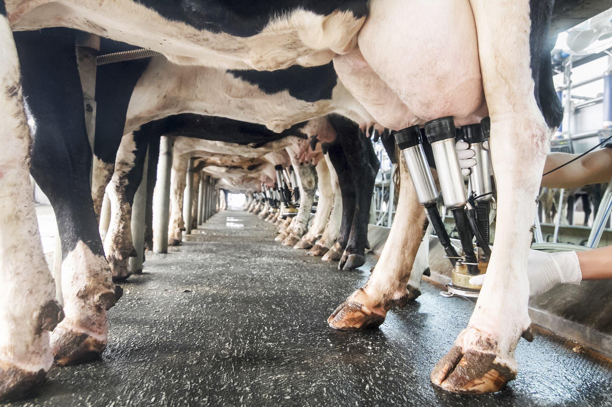 """""""Mal camino"""": los productores lecheros rechazan el """"desacople"""" en el mercado"""