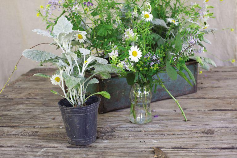 deco-con-plantas:-el-abc-para-hacer-arreglos-florales-y-llevar-naturaleza-a-tus-espacios