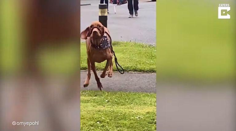 video:-el-emotivo-reencuentro-de-este-perro-y-su-duena-tras-18-meses-separados